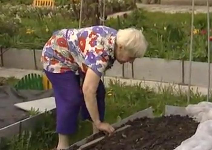 предлагаем огород без хлопот для пожилых фото пятницам субботам проводятся